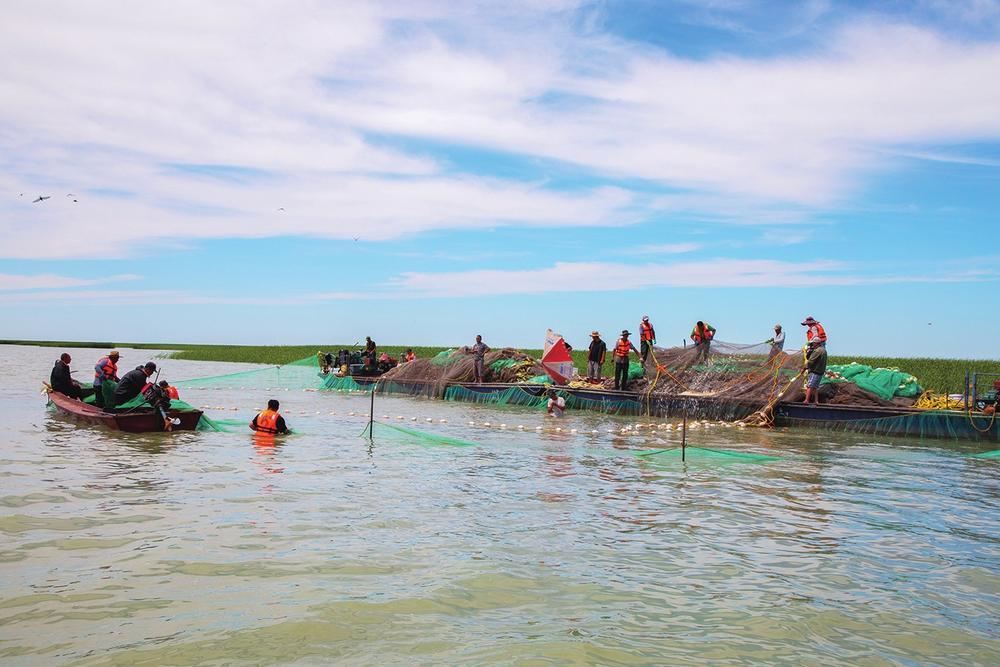 夏季捕鱼现场。