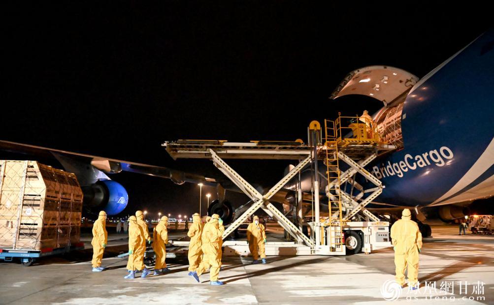 丹麦种猪从兰州中川国际机场入境 张蓝翔 摄