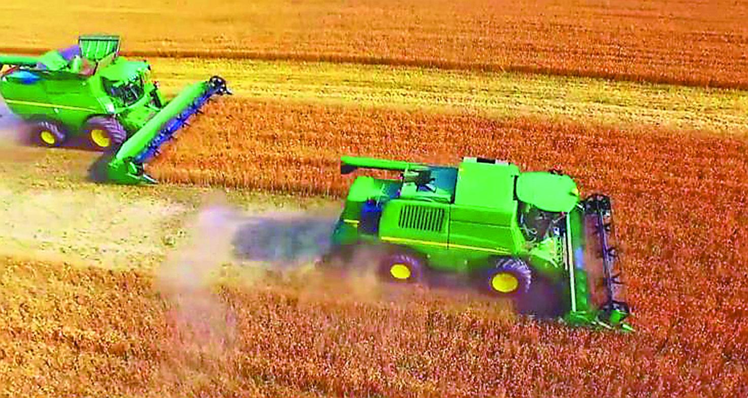 万亩稻田。