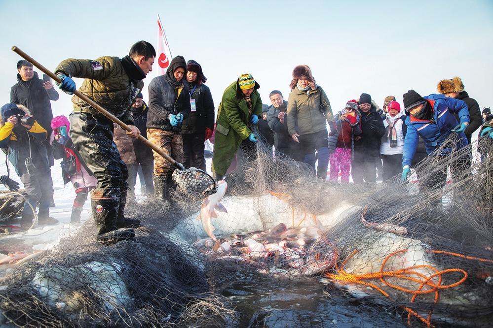 冬捕出鱼的瞬间。