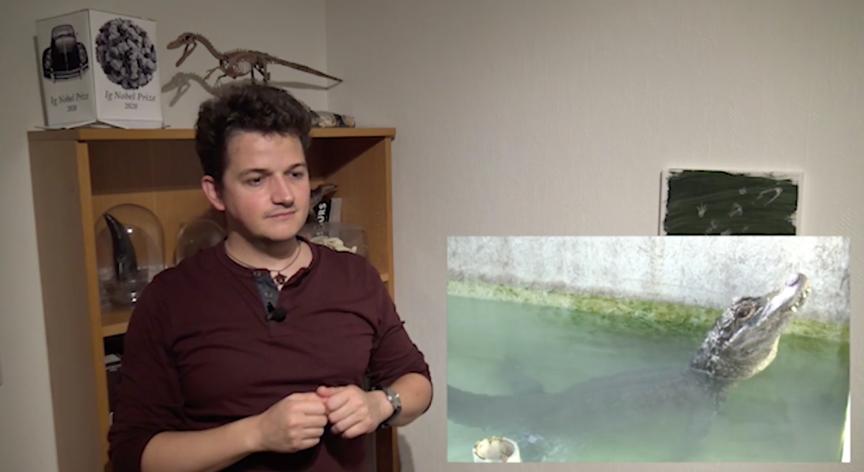 就是这只鳄鱼(此时解说的研究者也吸了氦气,声音变得很好笑)