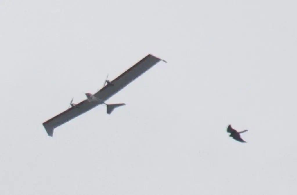 """飞鸟相伴""""仿生太阳能集群无人机""""而飞"""