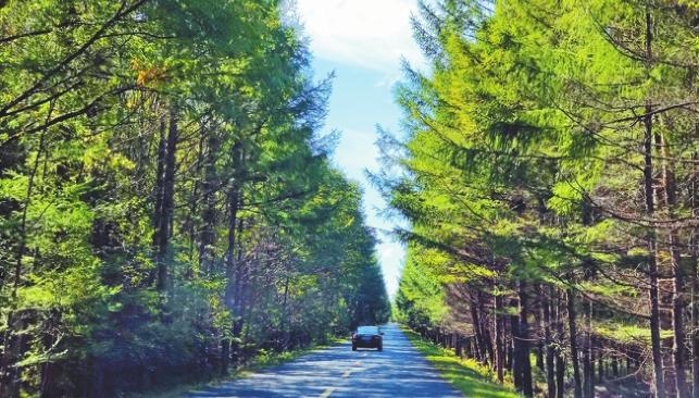 """全长110千米的乌带公路,两侧遍植高大挺拔的云杉、落叶松,堪称""""森林天路""""。邢国军摄"""