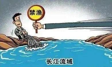 """泸州一商家宣称所售商品为""""长江流域自然野生淡水鱼""""被处罚"""