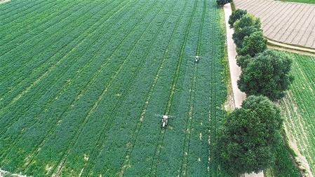 在定西市安定区香泉镇马铃薯种植基地,农民驾驶农机进行田间管理。新甘肃·甘肃日报 通讯员 易思耿