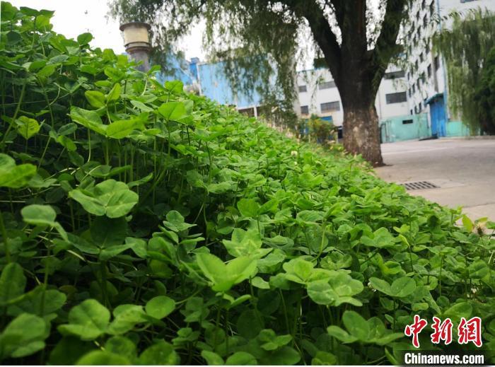 图为掩映在绿树鲜花中的厂房 杜萍 摄
