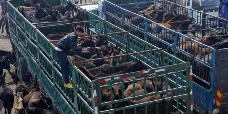 逛千年驴市 品驴肉美食 沈阳旅游好去处:法库县叶茂台毛驴产业小镇
