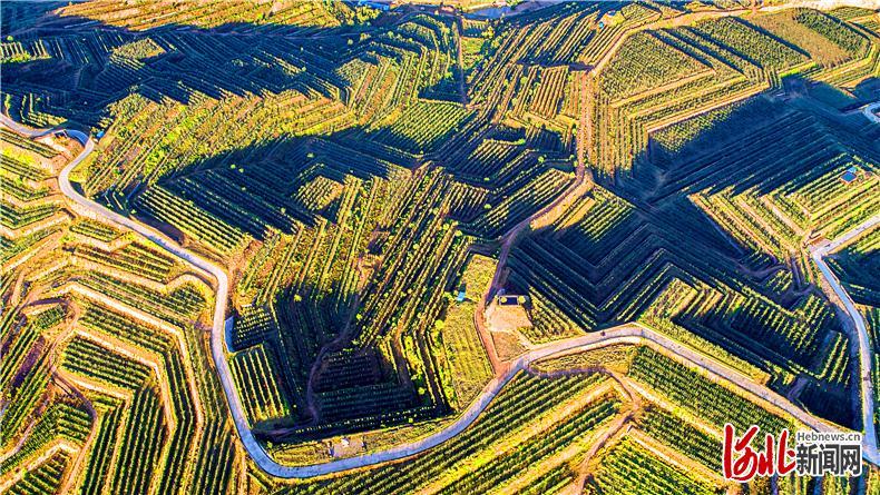 经过7年探索和实践,阜平县万亩荒山变成万亩林果梯田。这是该县大道农业生态示范园,靠林果种植和生态旅游带动了周边5个行政村经济发展。 通讯员李康摄
