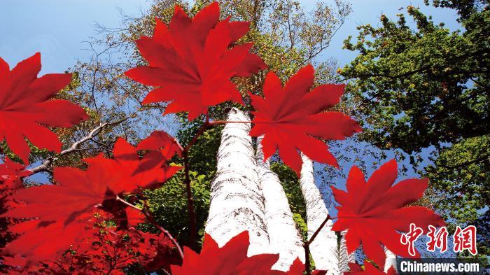 桦甸红叶。桦甸市委宣传部供图