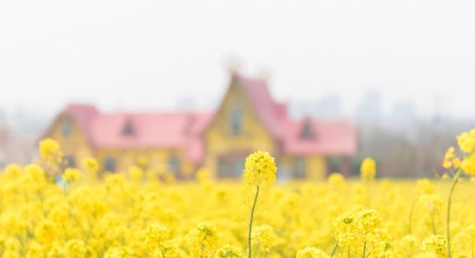 秋日在哪里赏菊花?快来青岛这些景点体验秋菊之韵