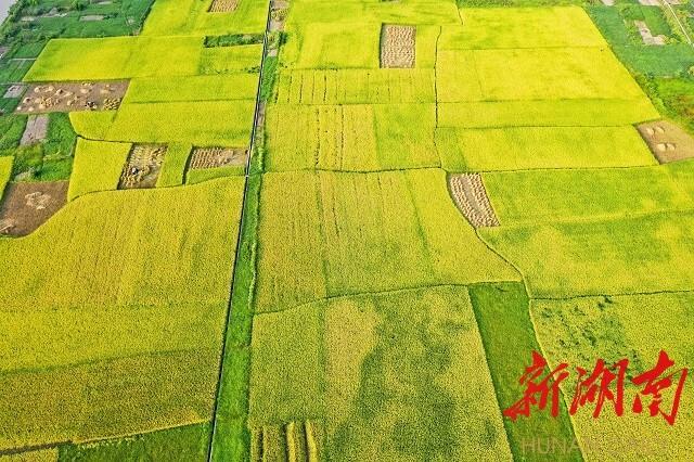 《农户丰收望》邹声爽拍摄于冷水江市三尖镇