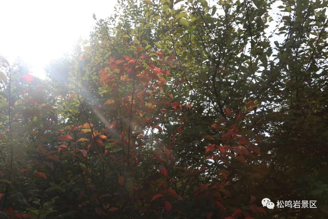 去临夏,把松鸣岩的秋天带回家……