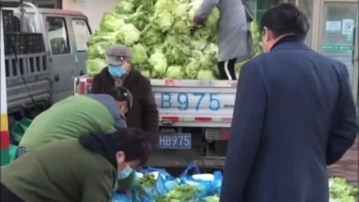 东北大娘囤白菜 买了300斤雇车拉:去年200斤没吃够