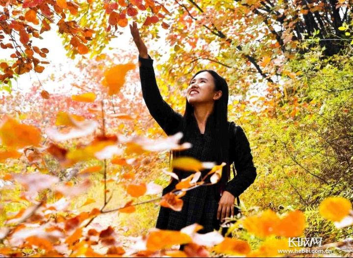 游客在涉县庄子岭景区欣赏红叶。