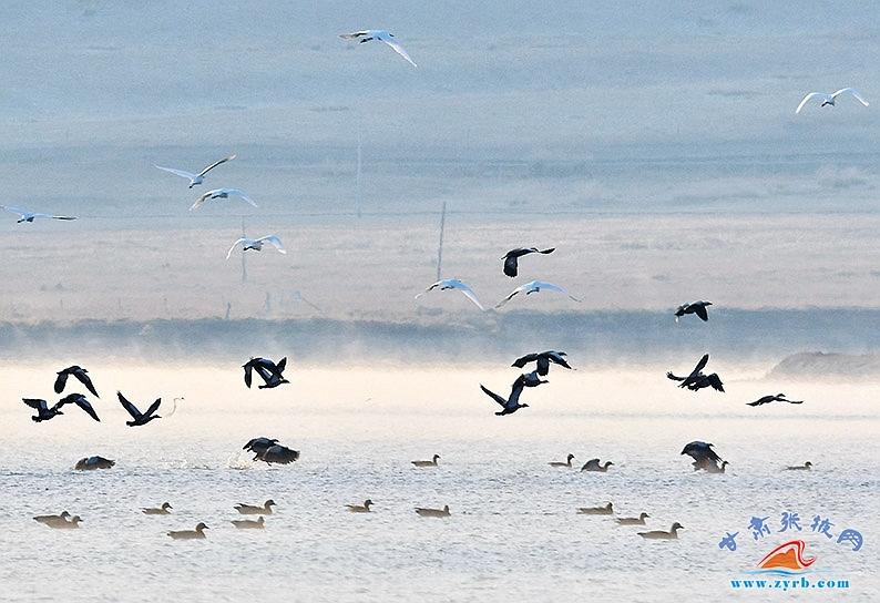 """首批数千只候鸟""""驾到"""" 带你看祁连山国家公园秋日画卷"""