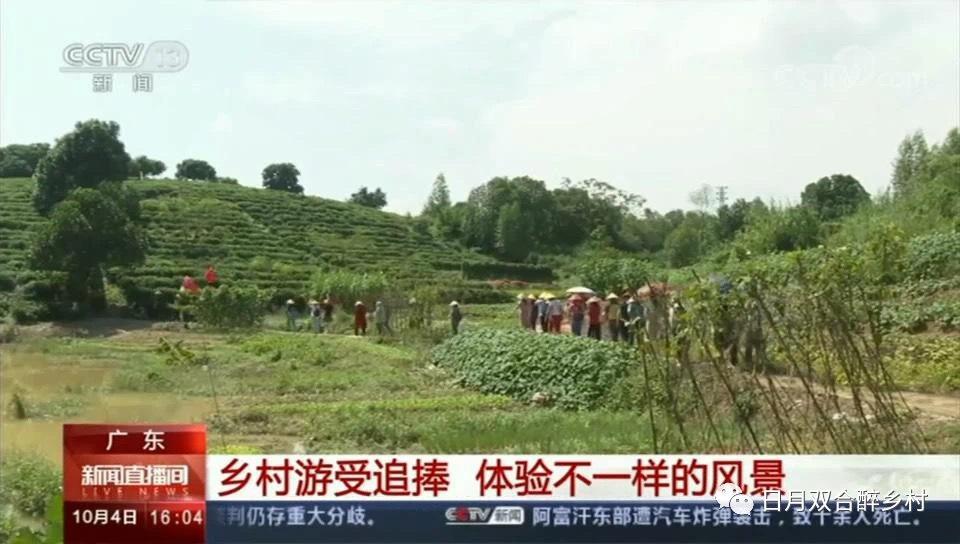 """双节期间,鹤山双合""""采茶游""""吸引央视关注报道。"""
