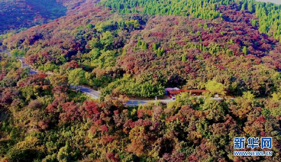 济南红叶谷4000余亩红叶林绽放