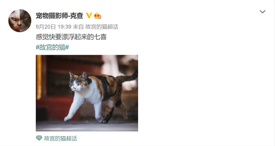 △ 摄影师克查经常拍摄故宫猫,并将照片放到微博上/微博截图