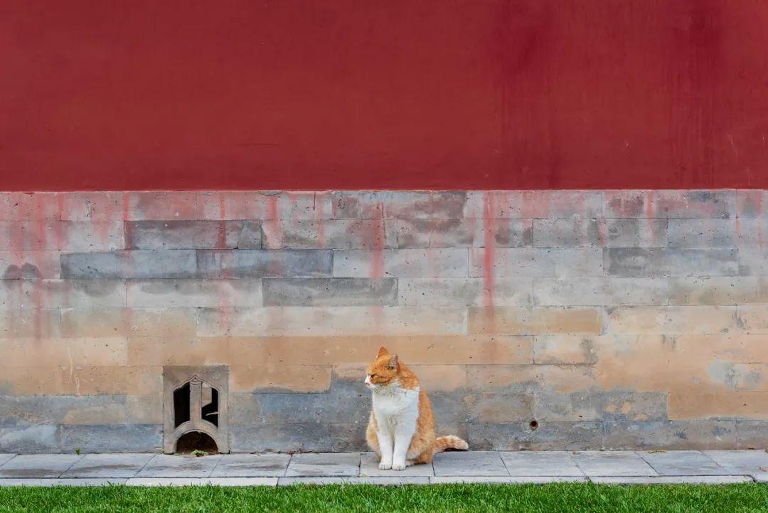 △ 故宫里的猫/图虫创意
