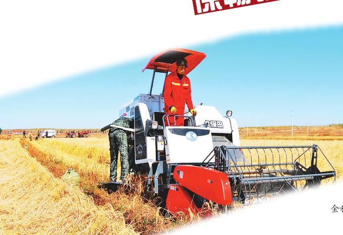 水稻实现机械化收割作业。