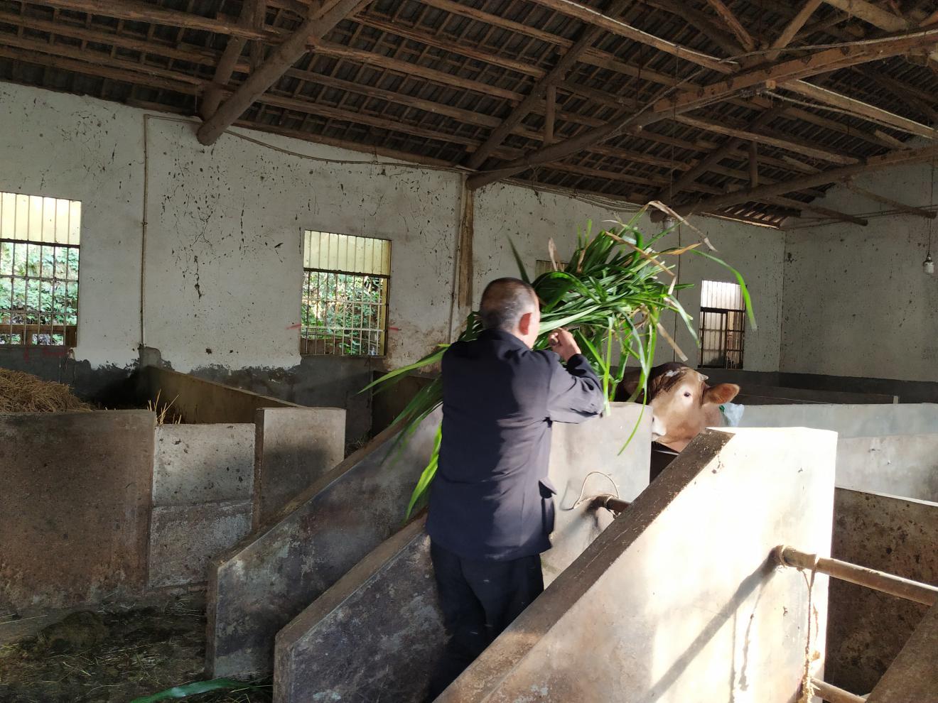 陈干武老人在家劳作。 安沙镇宋家桥村供图
