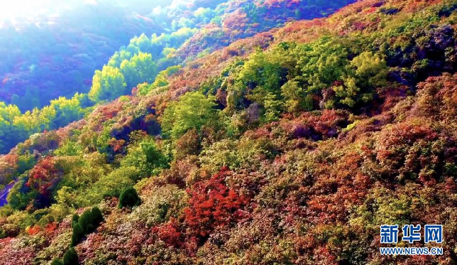 济南红叶谷景区红叶五彩斑斓