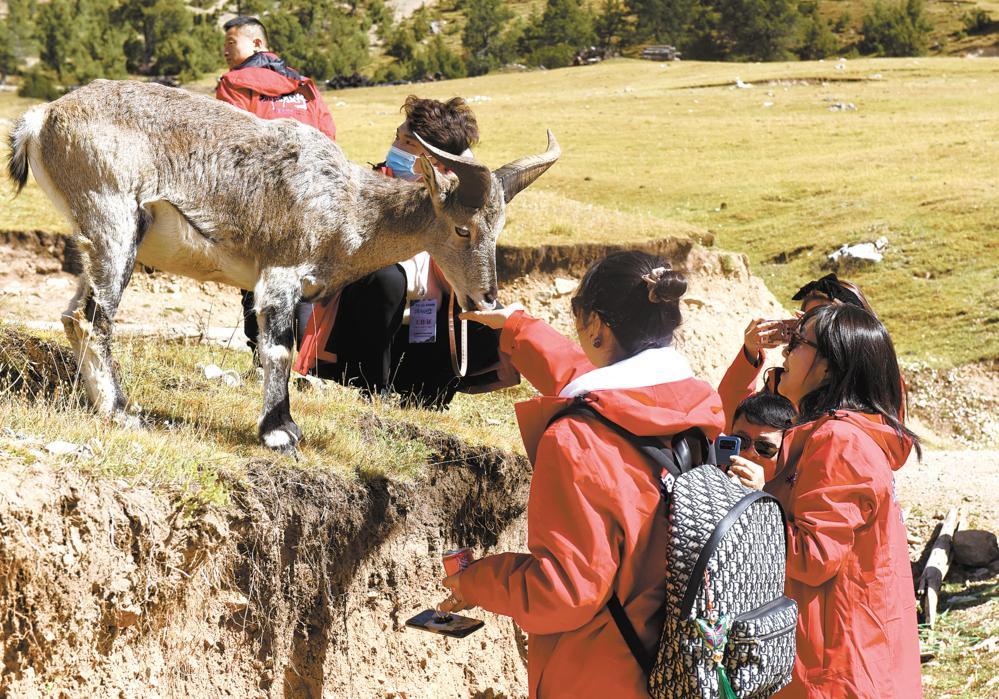 中外媒体记者在白扎林场邂逅岩羊群