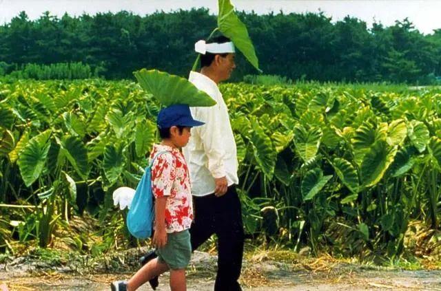 最近重映的经典电影《菊次郎的夏天》