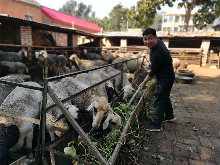 魏县房小庄村村民房向魁在家中喂羊。河北日报记者乔宾娟摄