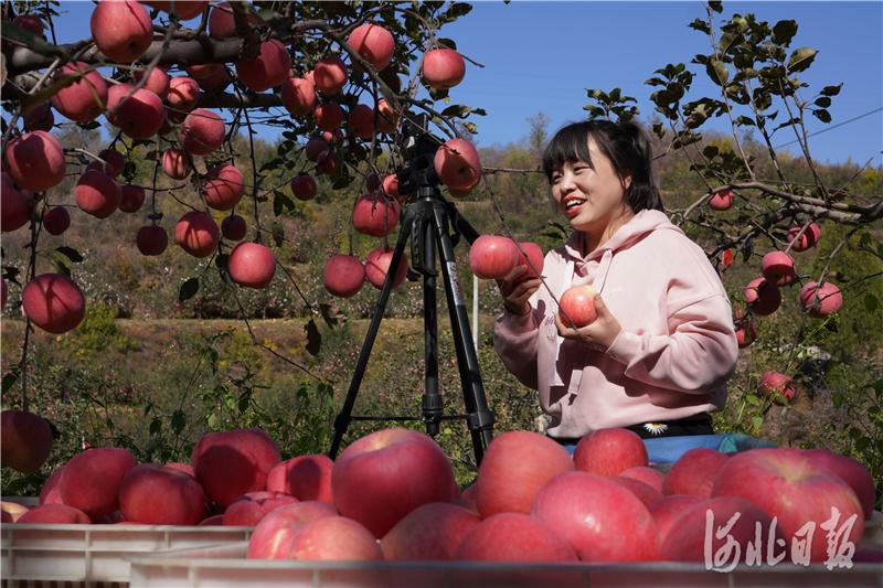 2020年10月23日,一名网络主播在河北省内丘县岗底村果园直播销售苹果。河北日报记者史晟全摄影报道