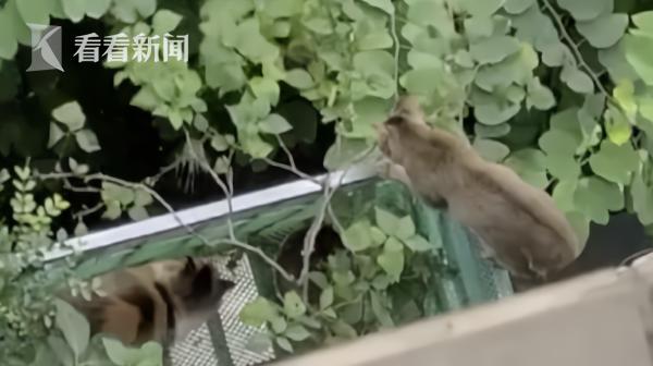 女子养近20只猫狗 邻居苦不堪言:屎尿都流到阳台