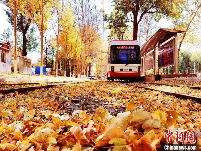 有轨电车从铺满落叶的铁轨上行过 刘栋 摄