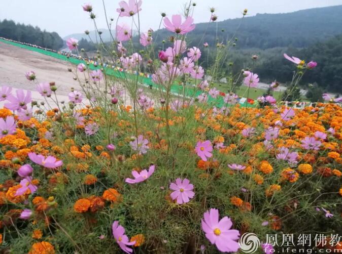 图片来源:凤凰网佛教 摄影:李慧玲