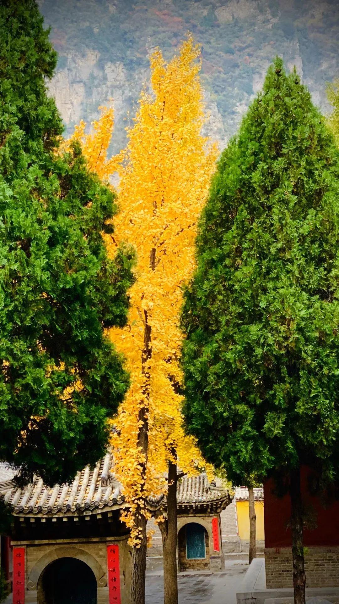 一叶知秋 来巩义邂逅一场秋天的童话吧