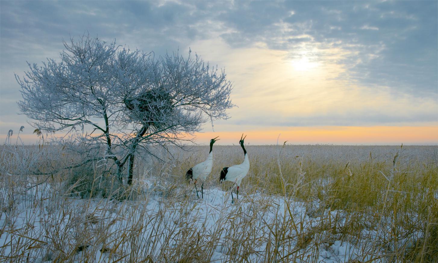 齐齐哈尔扎龙自然保护区