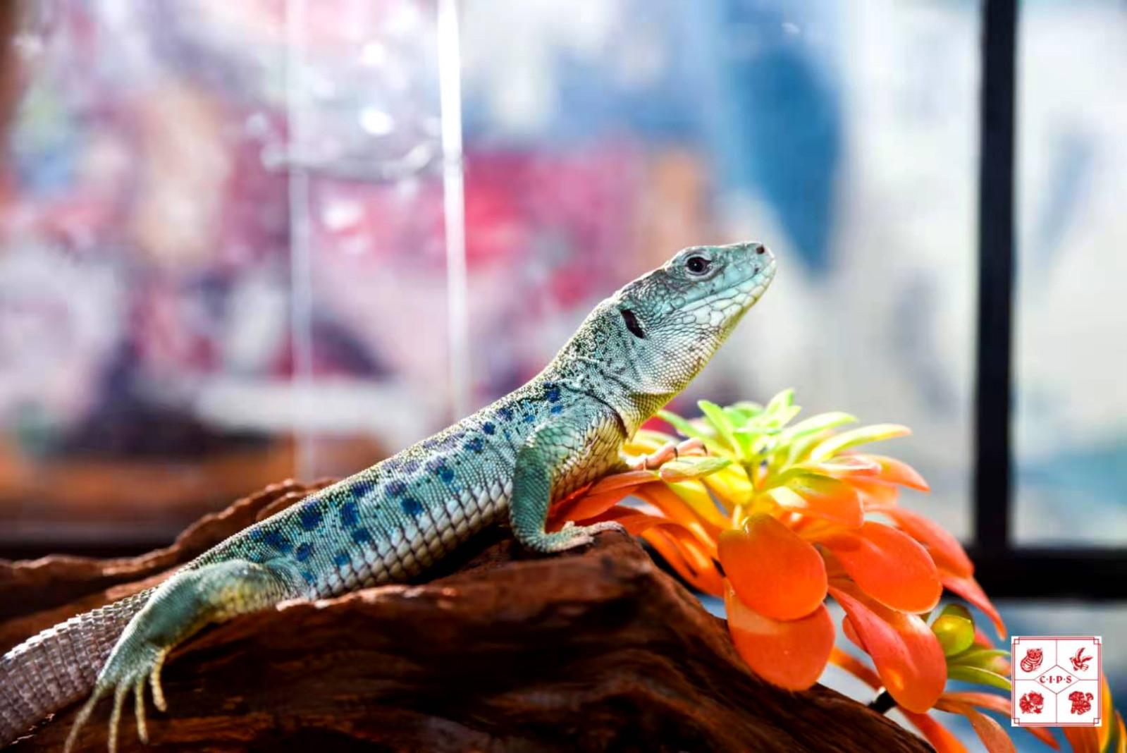 图为中国国际宠物水族展览会爬行宠物展品