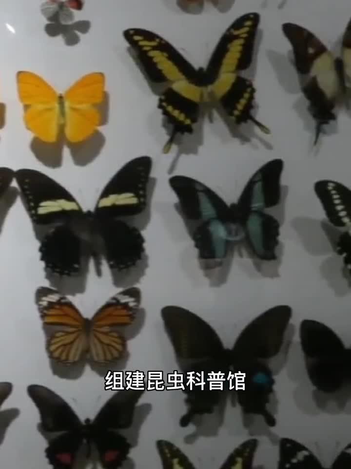 117 沈阳农业大学 植物保护 陶勇润 辛家玉