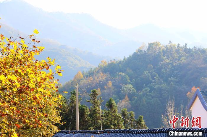 霭里村秋景。 张强 摄