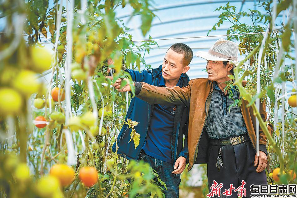 兰州市政府研究室驻韦家营村的帮扶干部带领村民发展蔬菜产业 本文图片除署名外均为新甘肃·甘肃日报记者 郁婕 摄