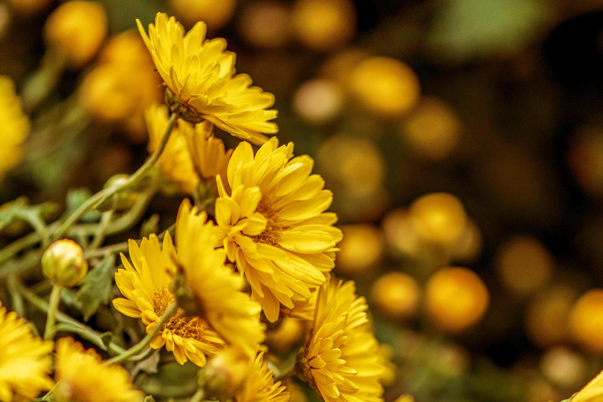 最美青岛 | 在中山公园,和菊花来一场秋日的邂逅
