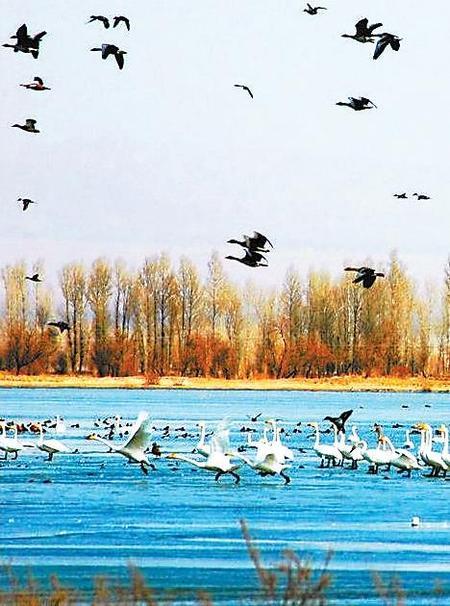 张掖 湿地公园
