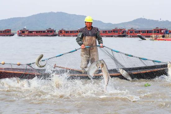 渔民用渔网捕鱼。蔡俊摄