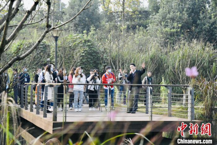 """图为""""共舞长江经济带——看高质量发展""""网络主题活动采访团在重庆两江新区礼嘉智慧公园采访。 许奥 摄"""