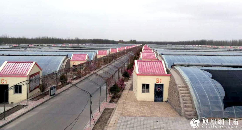 酒泉市供销社系统将蔬菜作为重点主导产业,建设钢架大棚720座。甘肃省供销联社供图