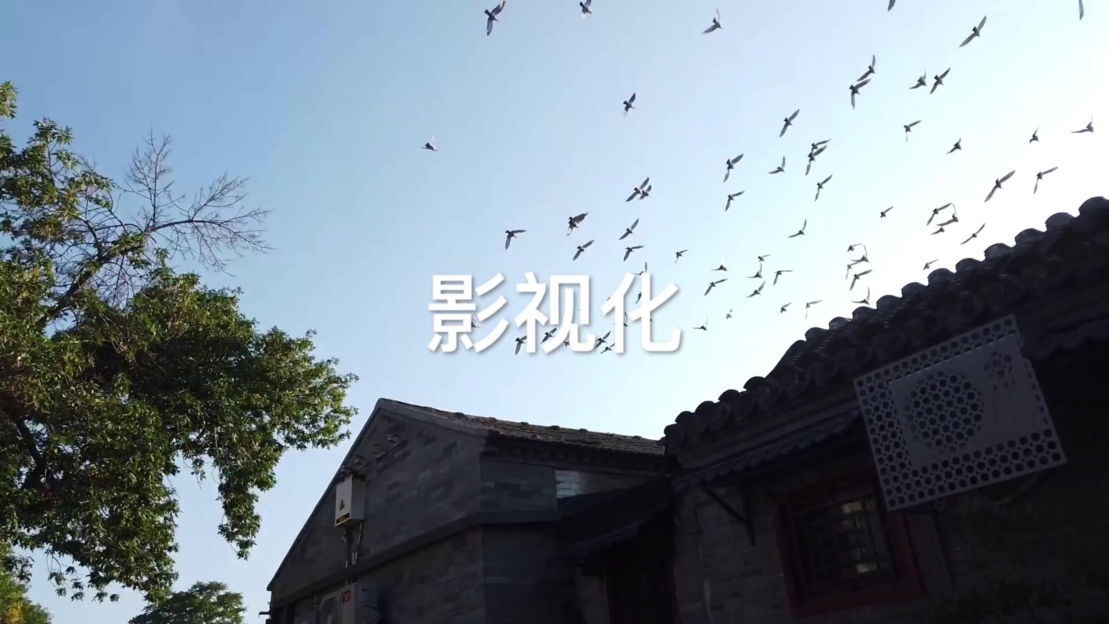 47 北京师范大学 戏剧影视文学 卢品言