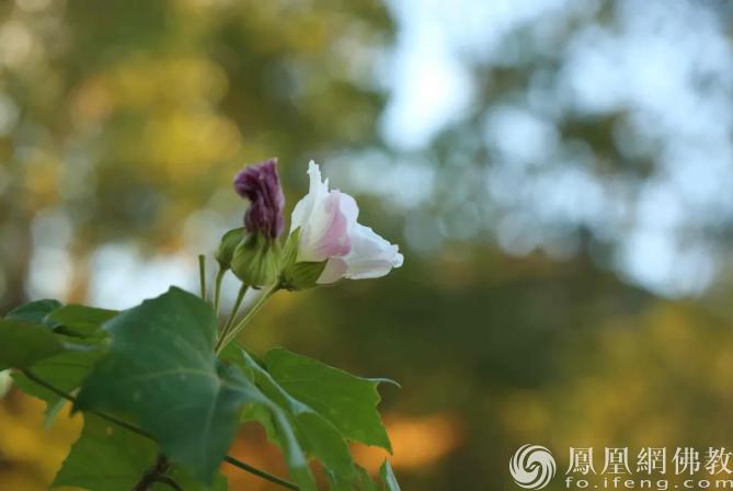 图片来源:凤凰网佛教 摄影:李婷