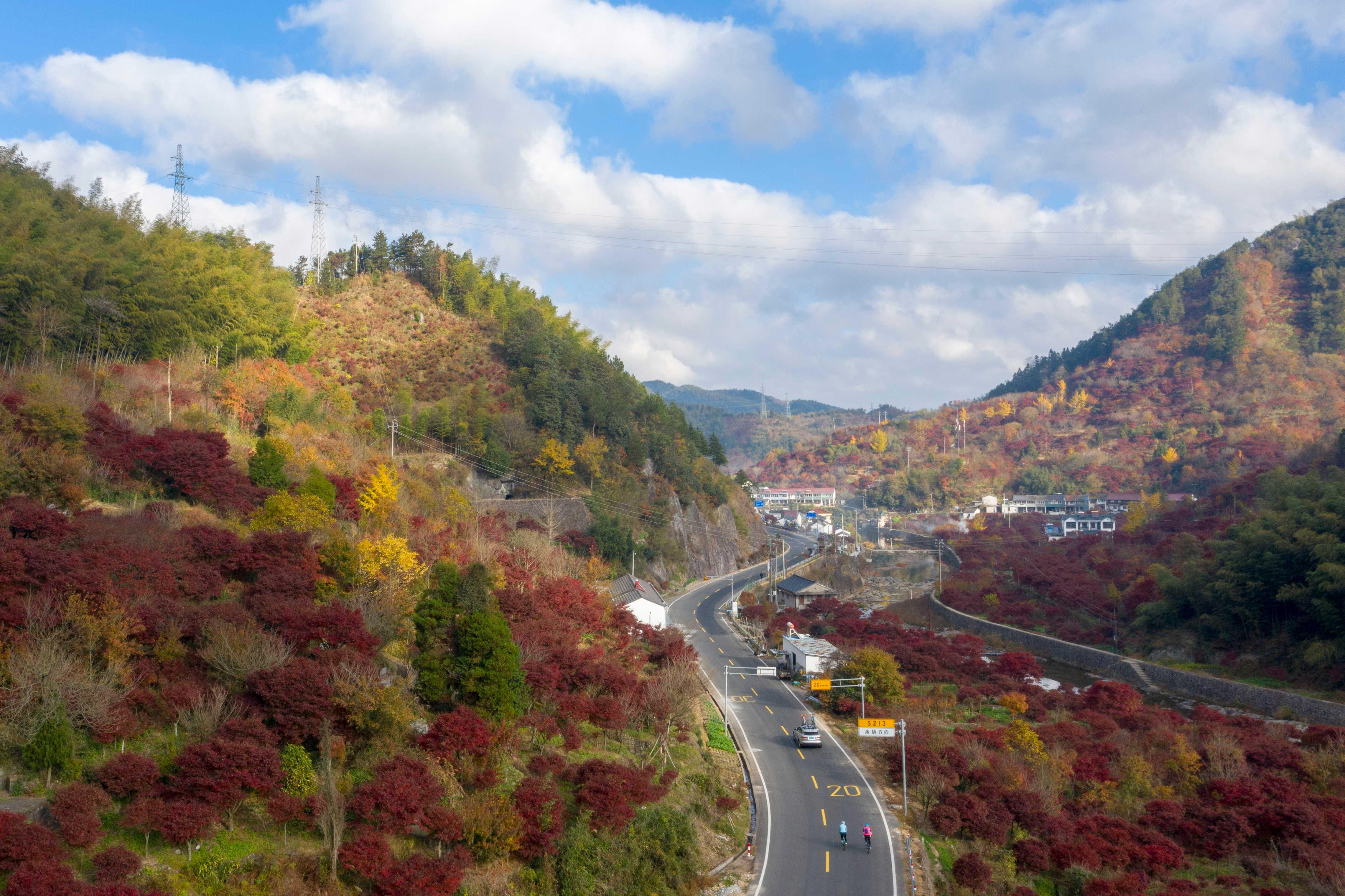 图为四明山红枫。