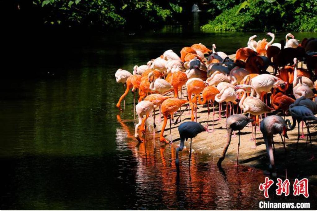 鸟类在河边栖息(资料图)。广东省林业局 供图