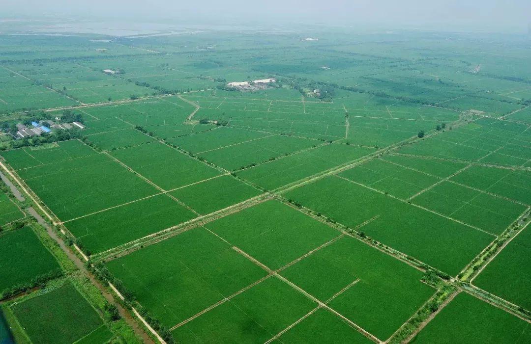 乐平就处于鄱阳湖的旁边,挨着贡米之乡万年县。高品质的糯米,使得这里能打出最细腻筋道的麻糍。也因为米多,使得年糕成为一种相较于其他地方,更平民化的食物。