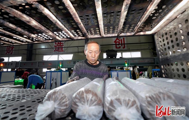 11月20日,河北省阜平县食用菌产业园区内工人在忙碌。